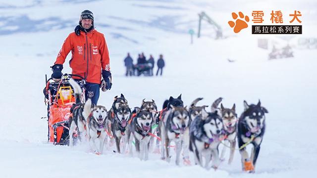 雪橇犬馬拉松系列賽